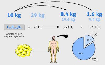 Studie: Verbranntes Fett wird ausgeatmet !